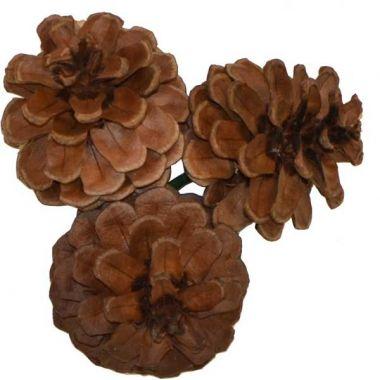 Small Triple Pine Cone Natural 2″