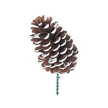Large Frosted Pine Cone w/Pick 5″