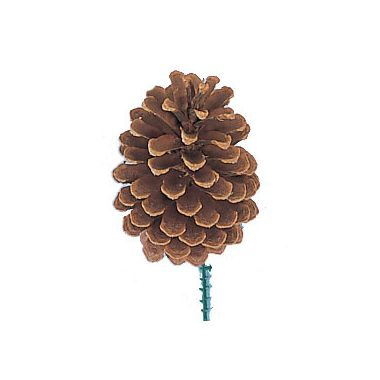 Large Pine Cone w/Pick 5″