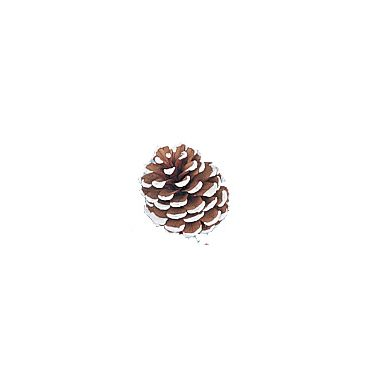Small Frosted Pine Cone 2″